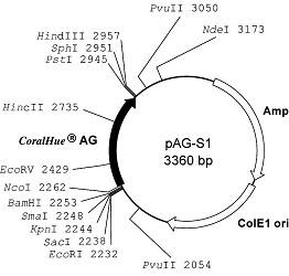 Plasmid map of pAG-S1
