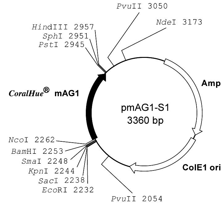 Plasmid map of pmAG1-S1