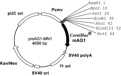 Plasmid map of pmAG1-MN1