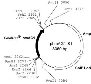 Plasmid map of phmAG1-S1