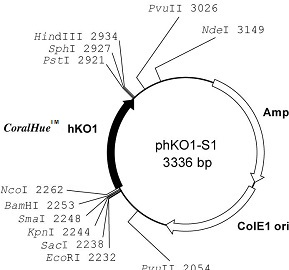 Plasmid map of phKO1-S1