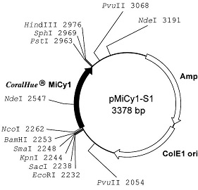 Plasmid map of pMiCy1-S1