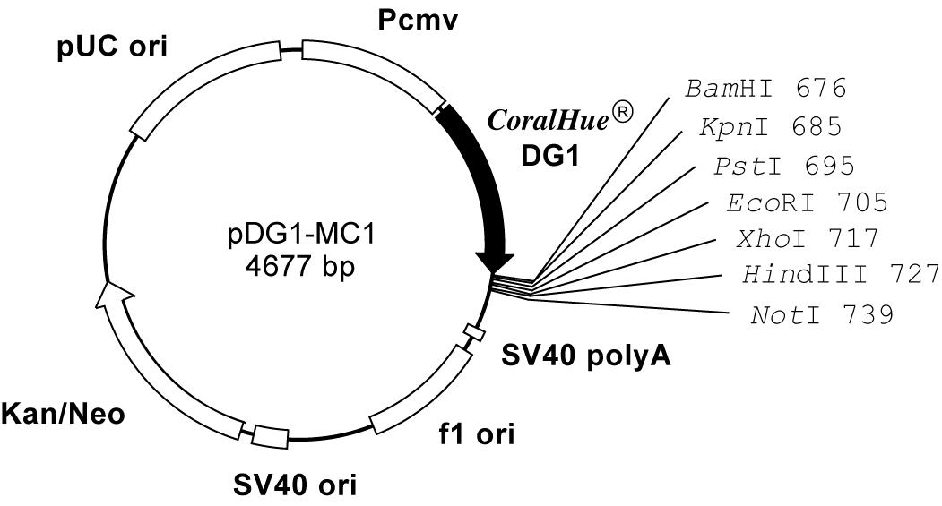 Plasmid map of pDG1-MC1
