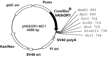 Plasmid map of phKikGR1-MC1