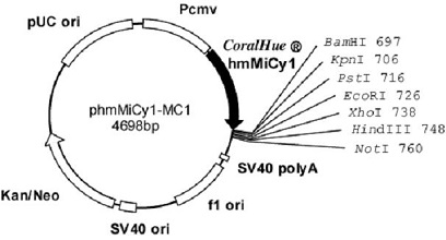 Plasmid map of phmMiCy-MC1