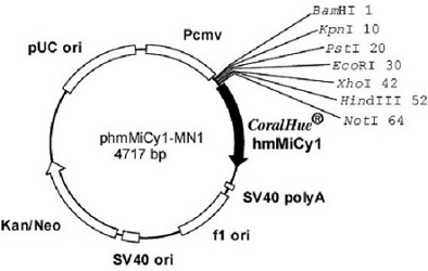 Plasmid map of phmMiCy1-MN1