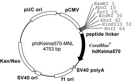 Plasmid map of phdKeima570-MCL