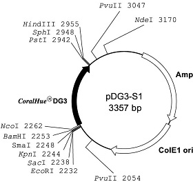 Plasmid map of pDG3-S1