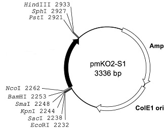 Plasmid map of pmKO2-S1
