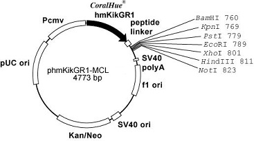 Plasmid map of phmKikGR1-MCL