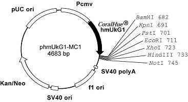 Plasmid map of phmUkG1-MC1