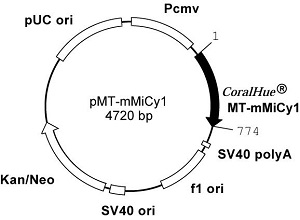 Plasmid map of pMT-mMiCy1