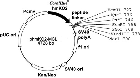 Plasmid map of phmKO2-MCL