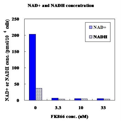 Effect of FK866 on NAD<sup>+</sup> and NADH concentrations