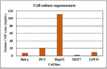 Human CIRP concentration in cell culture supernatants