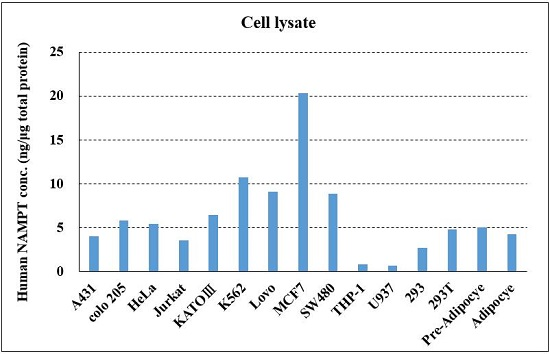 Human NAMPT concentration in cell lysates.