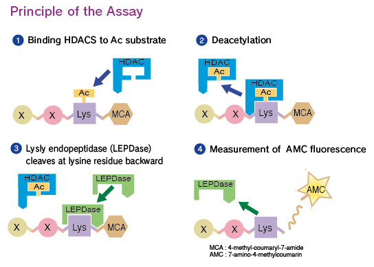 enzyme assay kit Htrf® enzyme assays provide a universal life science research the htrf® lipid kinase assay is a high-performance assay kit that provides a universal.
