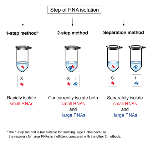 3 protocols for RNA isolation