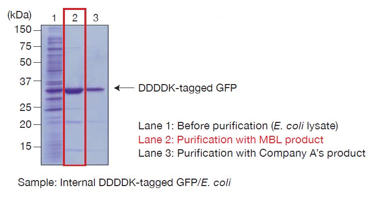 DDDDK-tagged Protein PURIFICATION KIT