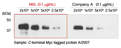 Anti-Myc-tag mAb (Clone: My3) WB