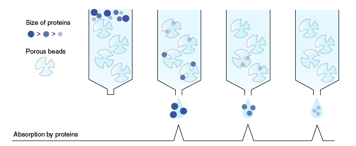 Principle of gel-filtration chromatography