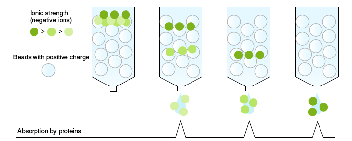 Principle of ion-exchange chromatography