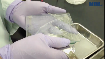 Remove the gel from the glass plates