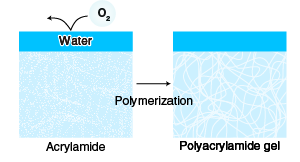 The principle and method of polyacrylamide gel
