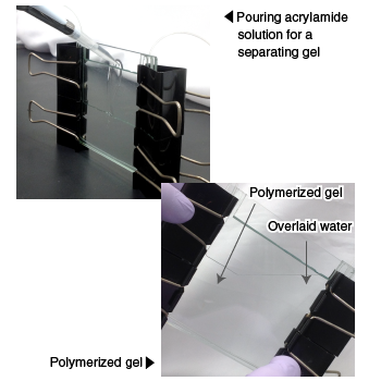 Pouring acrylamide solution for a separating gel