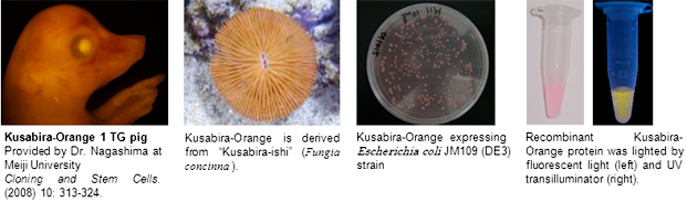 Kusabira-Orange: KO images