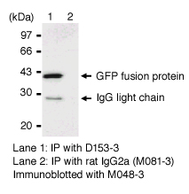 Anti-GFP mAb (RQ2) IP