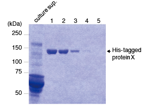 3311 Purification of C-terminal His-tagged protein X from culture supernatant